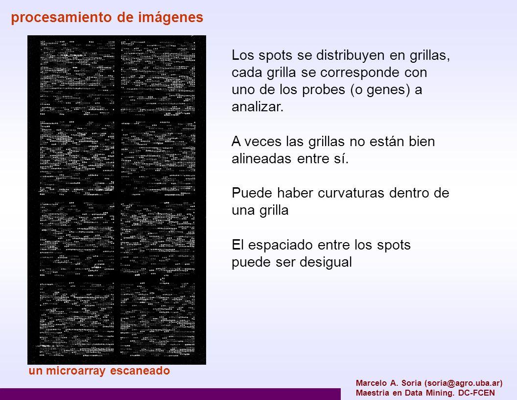 procesamiento de imágenes Cualquiera sea el tipo de microarray que utilicemos, tenemos que convertir los pixels de la imagen escaneada del microarray en información de expresión 1.escaneado (uno o dos canales) 2.manipulación del contraste 3.estimación preliminar de los centros de los spots 4.eliminar artefactos 5.determinar la localización precisa del spot 6.determinar la forma y tamaño del spot 7.estimar el background Dependiendo del tipo de microarray y de la plataforma, esto proceso puede ser más o menos automatizado Marcelo A.