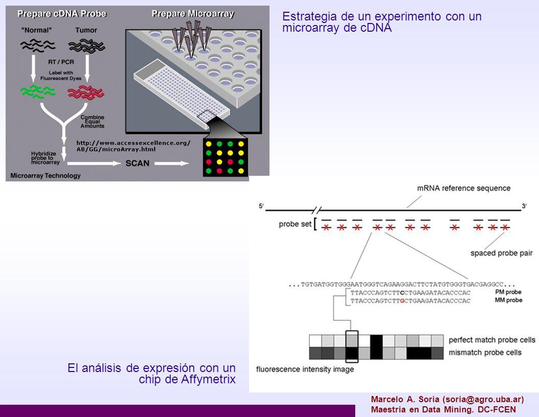 normalización Es una colección de métodos para tratar con los errores sistemáticos y los sesgos introducidos por la plataforma experimental utilizada Etapas Limpieza de los datos y transformación Normalización dentro del array (para arrays de 2 canales) Normalización entre arrays Marcelo A.