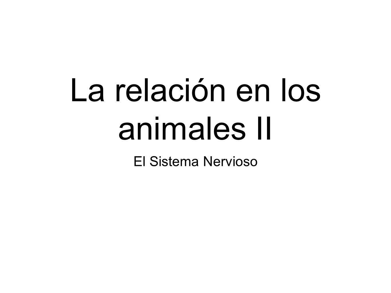 La relación en los animales II El Sistema Nervioso