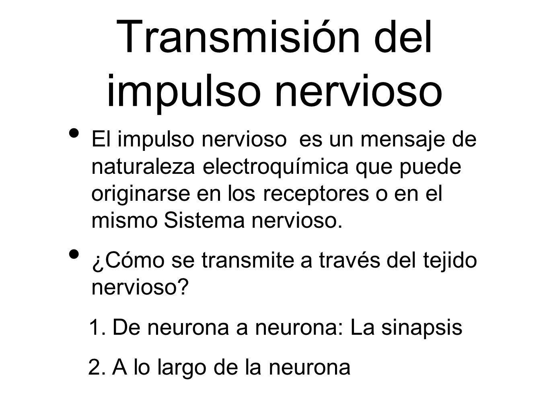 Transmisión del impulso nervioso El impulso nervioso es un mensaje de naturaleza electroquímica que puede originarse en los receptores o en el mismo S