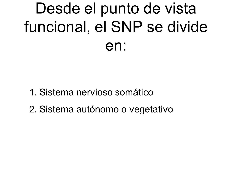 Desde el punto de vista funcional, el SNP se divide en: 1. Sistema nervioso somático 2. Sistema autónomo o vegetativo