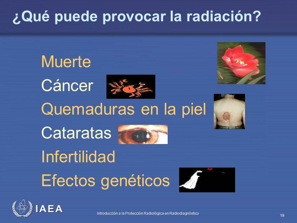IAEA Introducción a la Protección Radiológica en Radiodiagnóstico 19 Muerte Cáncer Quemaduras en la piel Cataratas Infertilidad Efectos genéticos ¿Qué