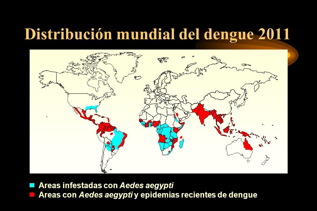 Distribución mundial del dengue 2011 Areas infestadas con Aedes aegypti Areas con Aedes aegypti y epidemias recientes de dengue