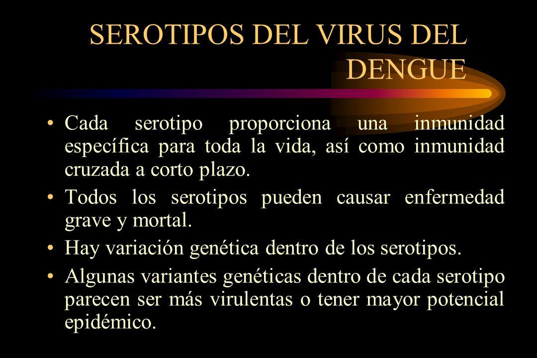 SEROTIPOS DEL VIRUS DEL DENGUE Cada serotipo proporciona una inmunidad específica para toda la vida, así como inmunidad cruzada a corto plazo. Todos l
