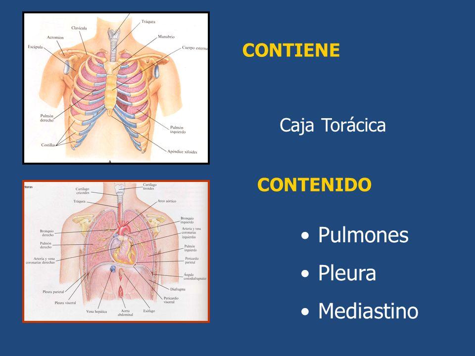 CONTENIDO CONTIENE Caja Torácica Pulmones Pleura Mediastino