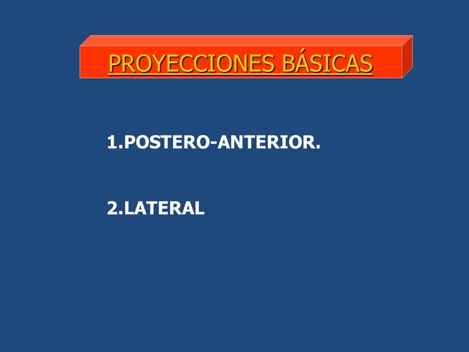 POSTERO-ANTERIOR
