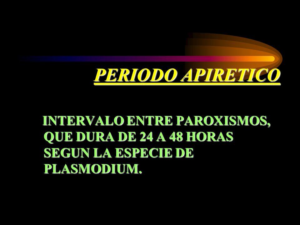 PERIODO APIRETICO INTERVALO ENTRE PAROXISMOS, QUE DURA DE 24 A 48 HORAS SEGUN LA ESPECIE DE PLASMODIUM. INTERVALO ENTRE PAROXISMOS, QUE DURA DE 24 A 4