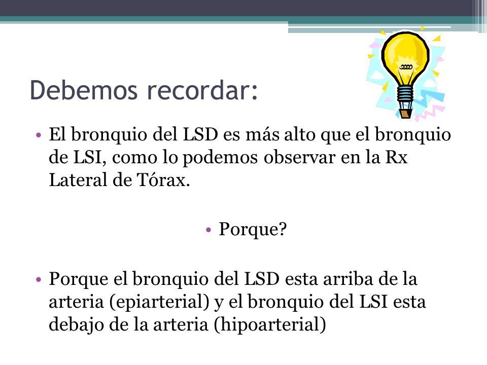 Debemos recordar: El bronquio del LSD es más alto que el bronquio de LSI, como lo podemos observar en la Rx Lateral de Tórax. Porque? Porque el bronqu