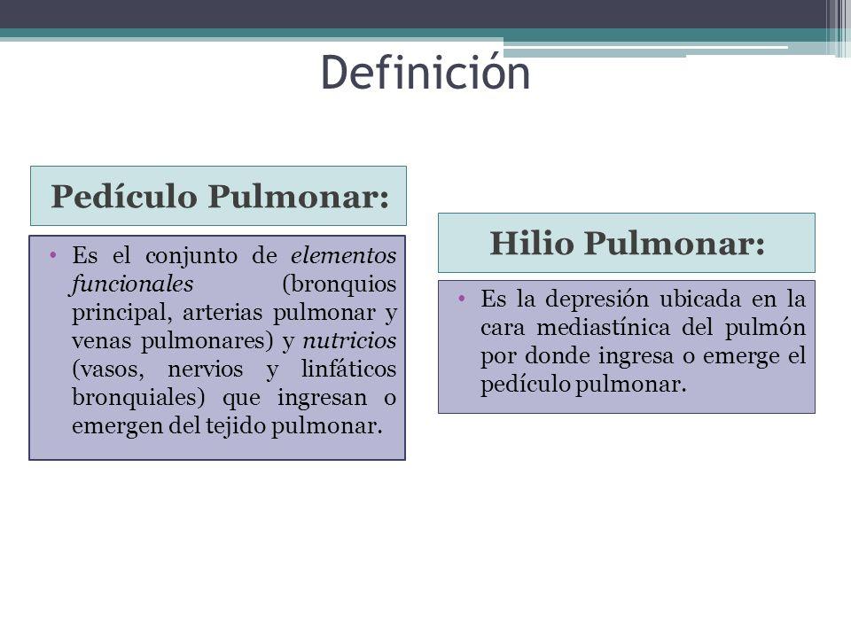 Definición Pedículo Pulmonar: Hilio Pulmonar: Es el conjunto de elementos funcionales (bronquios principal, arterias pulmonar y venas pulmonares) y nu
