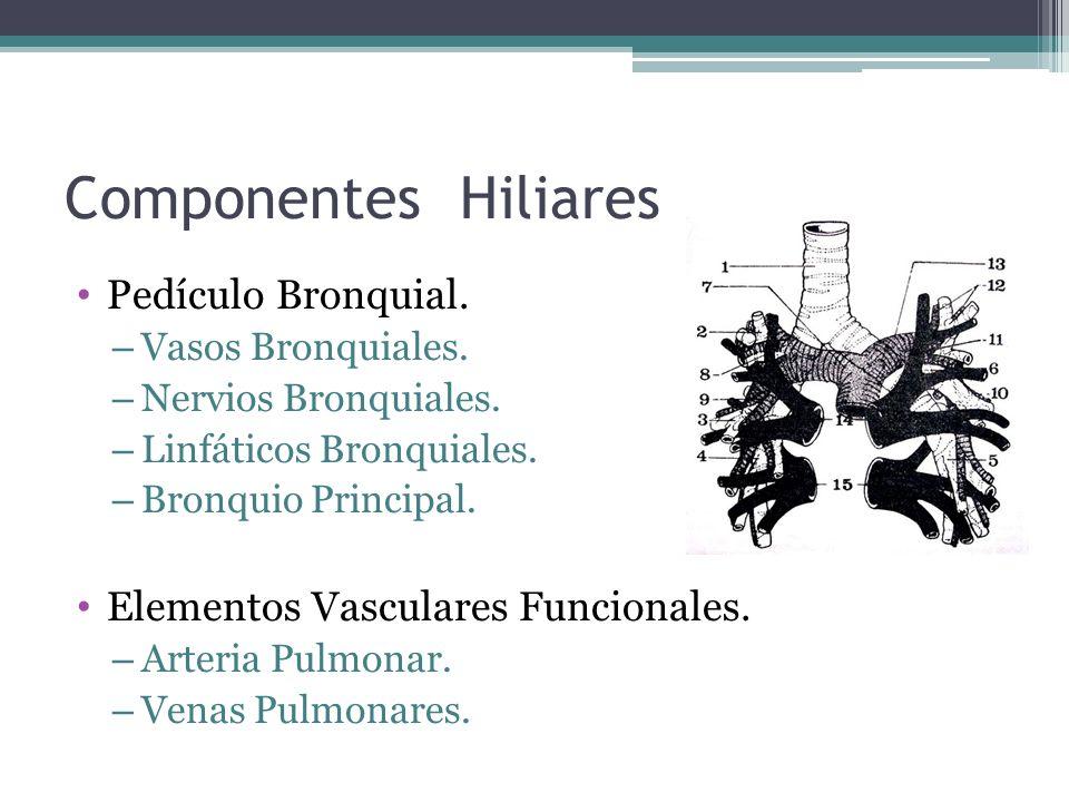 Componentes Hiliares Pedículo Bronquial. – Vasos Bronquiales. – Nervios Bronquiales. – Linfáticos Bronquiales. – Bronquio Principal. Elementos Vascula