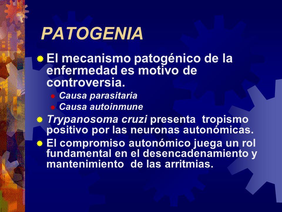 PATOGENIA El mecanismo patogénico de la enfermedad es motivo de controversia. Causa parasitaria Causa autoinmune Trypanosoma cruzi presenta tropismo p