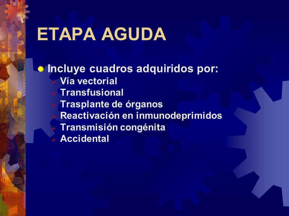 ETAPA AGUDA Incluye cuadros adquiridos por: Vía vectorial Transfusional Trasplante de órganos Reactivación en inmunodeprimidos Transmisión congénita A