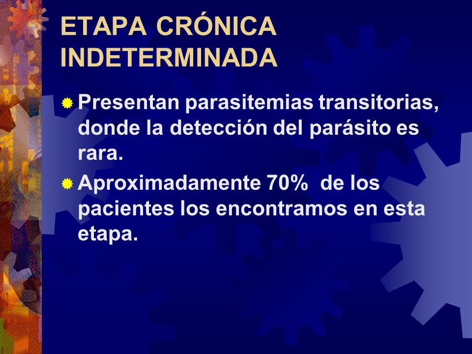 ETAPA CRÓNICA INDETERMINADA Presentan parasitemias transitorias, donde la detección del parásito es rara. Aproximadamente 70% de los pacientes los enc