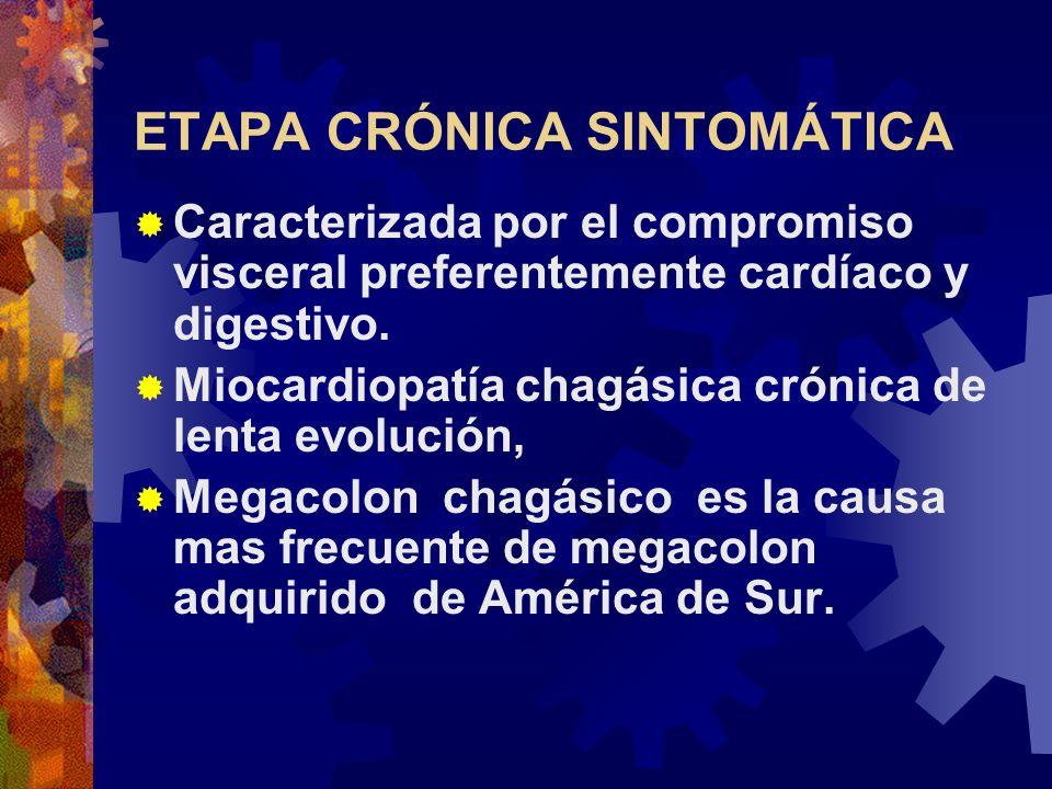 ETAPA CRÓNICA SINTOMÁTICA Caracterizada por el compromiso visceral preferentemente cardíaco y digestivo. Miocardiopatía chagásica crónica de lenta evo