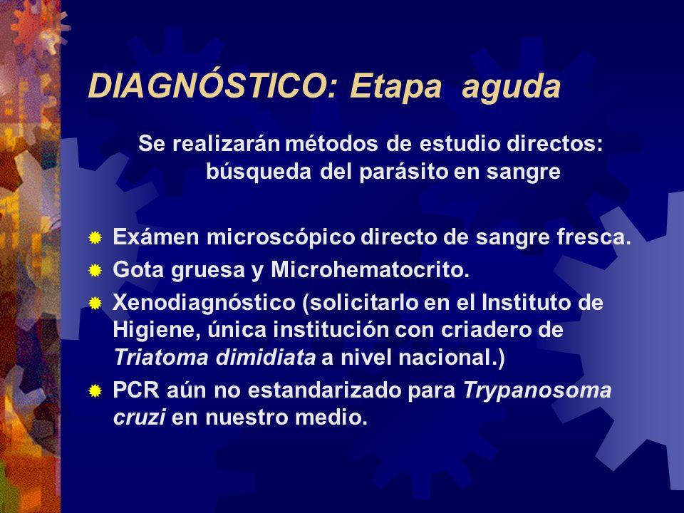DIAGNÓSTICO: Etapa aguda Se realizarán métodos de estudio directos: búsqueda del parásito en sangre Exámen microscópico directo de sangre fresca. Gota