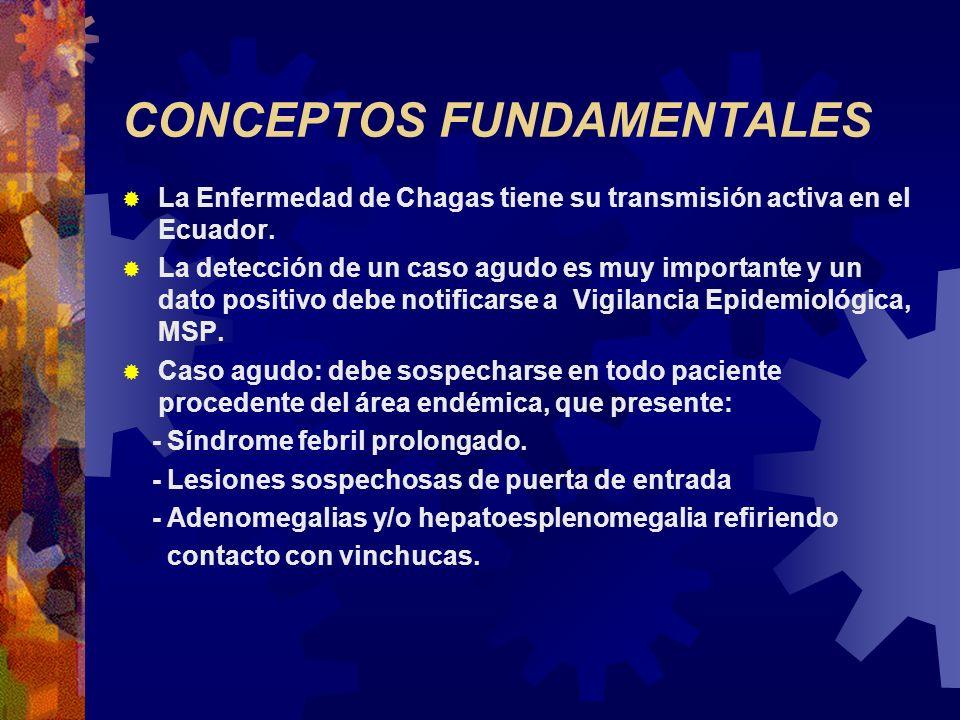 CONCEPTOS FUNDAMENTALES La Enfermedad de Chagas tiene su transmisión activa en el Ecuador. La detección de un caso agudo es muy importante y un dato p