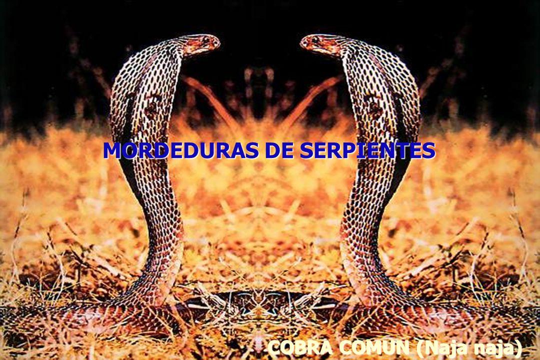 COBRA COMUN (Naja naja) MORDEDURAS DE SERPIENTES