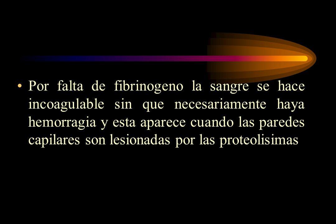 Por falta de fibrinogeno la sangre se hace incoagulable sin que necesariamente haya hemorragia y esta aparece cuando las paredes capilares son lesiona