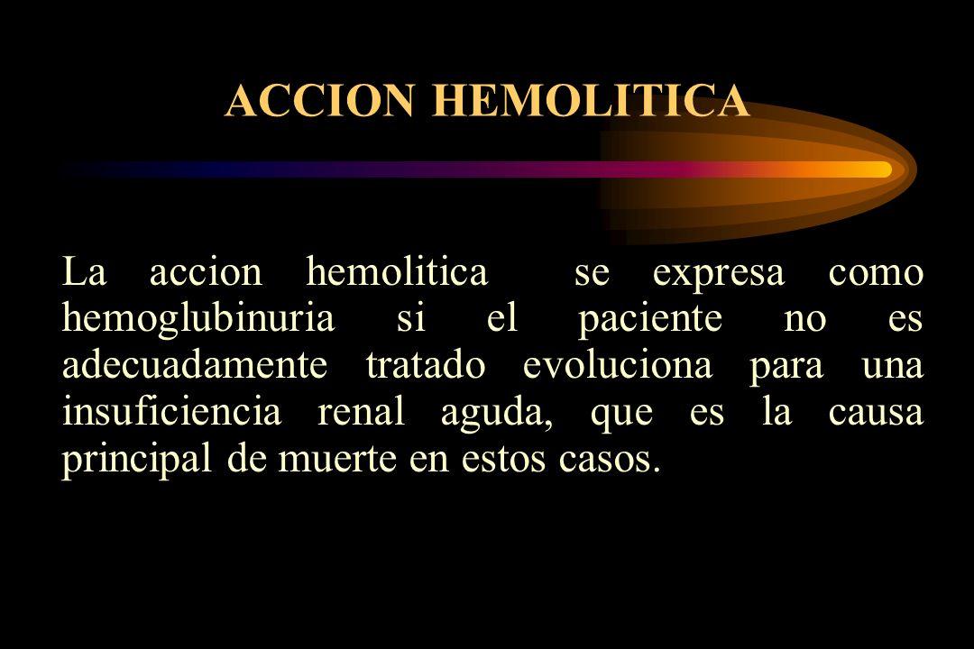 ACCION HEMOLITICA La accion hemolitica se expresa como hemoglubinuria si el paciente no es adecuadamente tratado evoluciona para una insuficiencia ren
