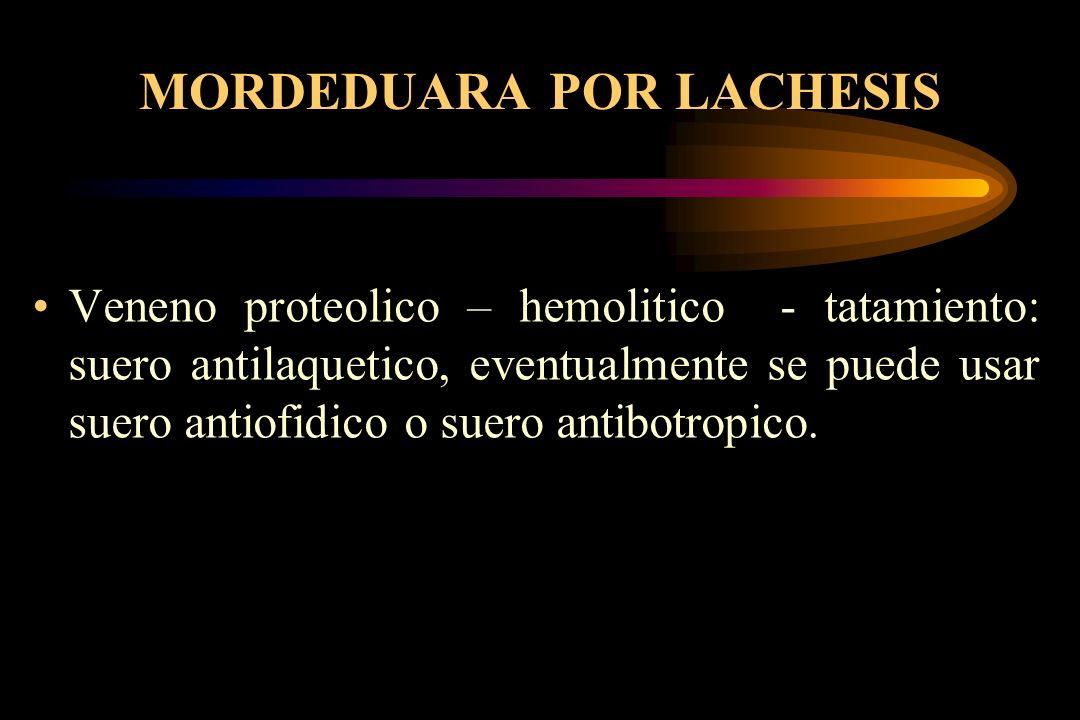 MORDEDUARA POR LACHESIS Veneno proteolico – hemolitico - tatamiento: suero antilaquetico, eventualmente se puede usar suero antiofidico o suero antibo