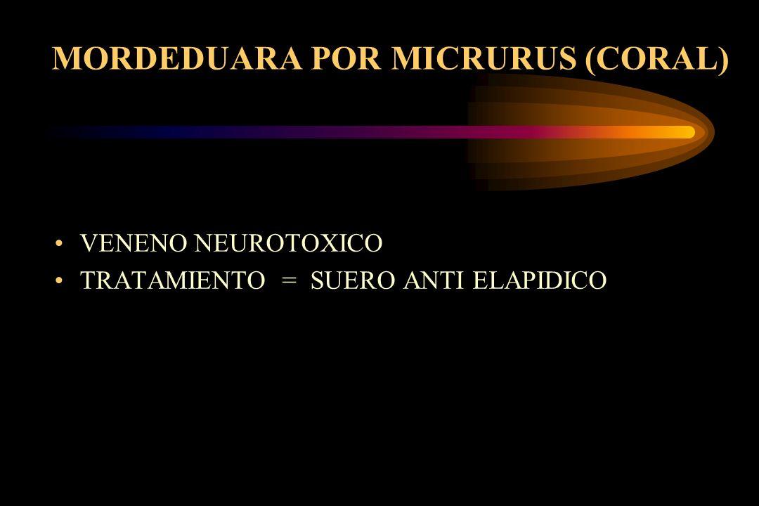 MORDEDUARA POR MICRURUS (CORAL) VENENO NEUROTOXICO TRATAMIENTO = SUERO ANTI ELAPIDICO