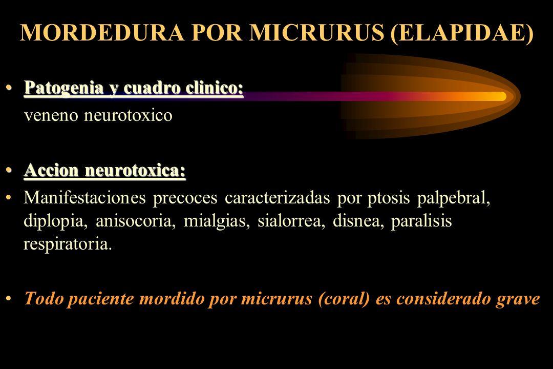 MORDEDURA POR MICRURUS (ELAPIDAE) Patogenia y cuadro clinico:Patogenia y cuadro clinico: veneno neurotoxico Accion neurotoxica:Accion neurotoxica: Man