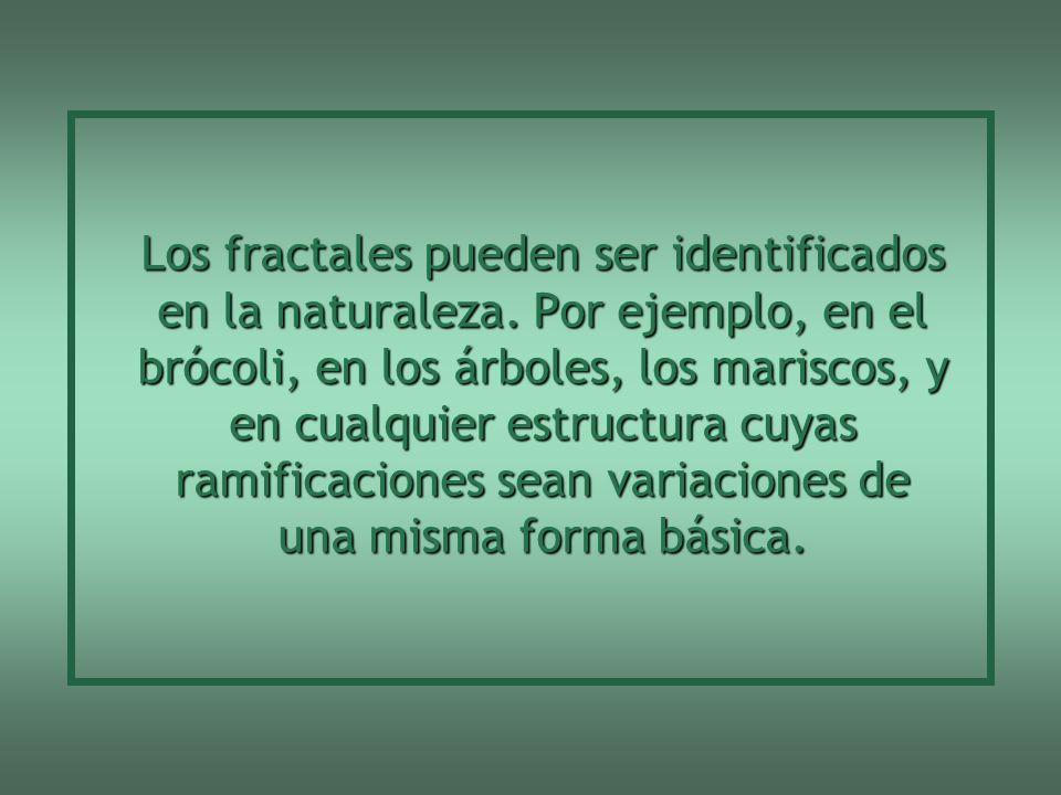 Los fractales pueden ser identificados en la naturaleza.