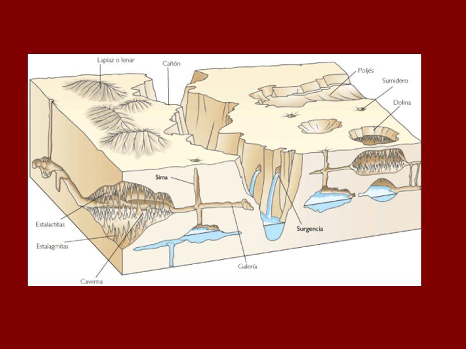 Dolinas: depresión en forma circular, generadas por derrumbe del techo de cuevas subterráneas.