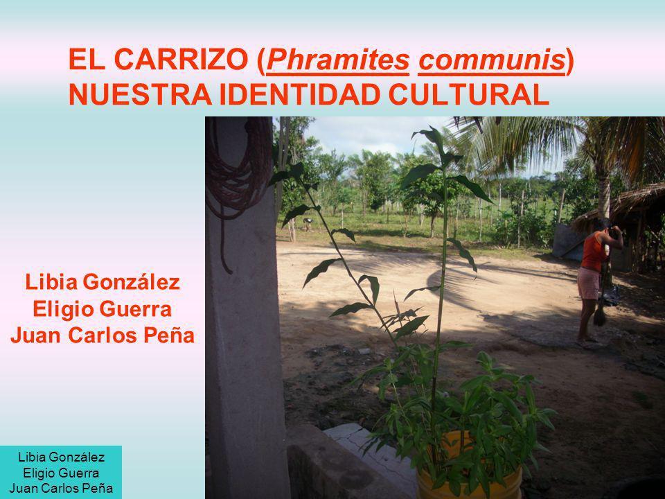 Descripción del problema y pregunta a investigar ¿Cuál es el nivel de identidad cultural que tienen los habitantes del corregimiento de Carrizal con respecto a la planta de carrizo (Phramites communis).