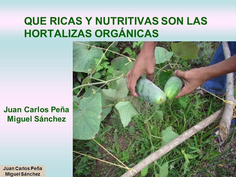 QUE RICAS Y NUTRITIVAS SON LAS HORTALIZAS ORGÁNICAS Juan Carlos Peña Miguel Sánchez