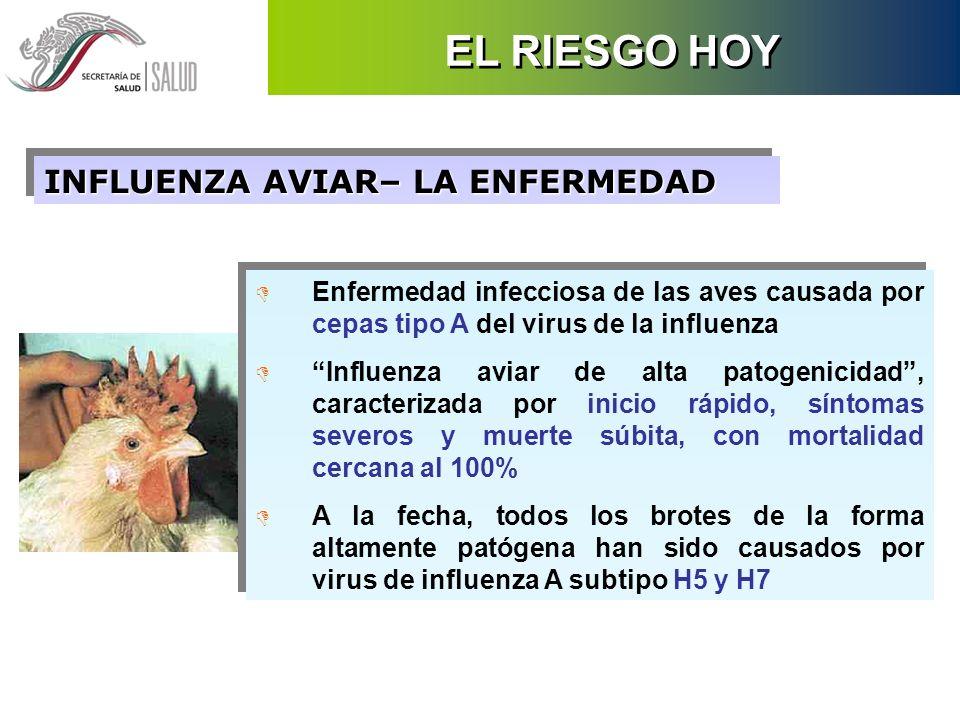 EL RIESGO HOY INFLUENZA AVIAR– LA ENFERMEDAD D Enfermedad infecciosa de las aves causada por cepas tipo A del virus de la influenza D Influenza aviar