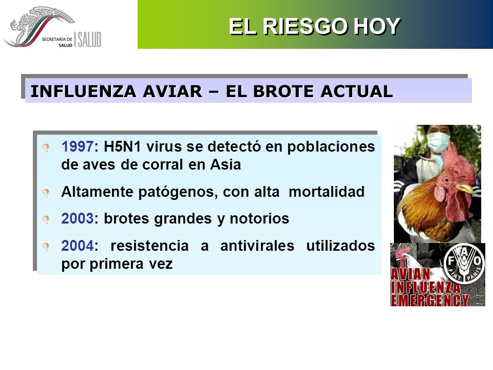 INFLUENZA AVIAR – EL BROTE ACTUAL D 1997: H5N1 virus se detectó en poblaciones de aves de corral en Asia D Altamente patógenos, con alta mortalidad D