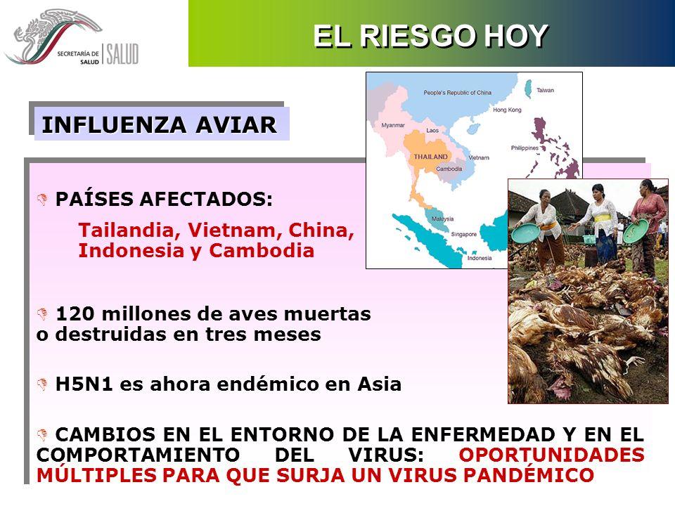 D PAÍSES AFECTADOS: Tailandia, Vietnam, China, Indonesia y Cambodia D 120 millones de aves muertas o destruidas en tres meses D H5N1 es ahora endémico