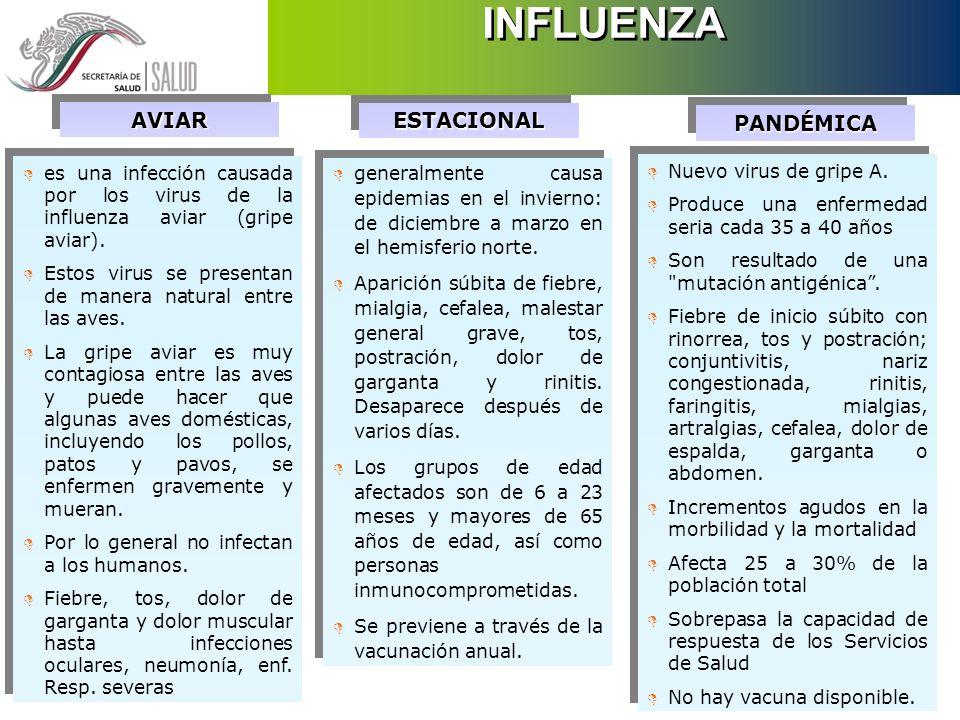 D La influenza es una enfermedad respiratoria viral altamente contagiosa D Causa enfermedad leve a grave que puede conducir a la muerte D Caracterizado por inicio súbito, fiebre alta, dolor de cabeza, fatiga, tos, dolor de garganta, rinorrea, congestión nasal y ataque al estado general D Las epidemias de influenza aparecen comúnmente en los meses de invierno con predominio de lugares donde el clima es frío y seco D La influenza es una enfermedad respiratoria viral altamente contagiosa D Causa enfermedad leve a grave que puede conducir a la muerte D Caracterizado por inicio súbito, fiebre alta, dolor de cabeza, fatiga, tos, dolor de garganta, rinorrea, congestión nasal y ataque al estado general D Las epidemias de influenza aparecen comúnmente en los meses de invierno con predominio de lugares donde el clima es frío y seco INFLUENZA LA ENFERMEDAD