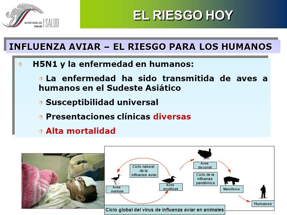 D H5N1 y la enfermedad en humanos: D La enfermedad ha sido transmitida de aves a humanos en el Sudeste Asiático D Susceptibilidad universal D Presenta