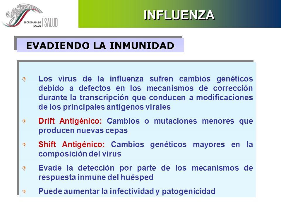 EVADIENDO LA INMUNIDAD D Los virus de la influenza sufren cambios genéticos debido a defectos en los mecanismos de corrección durante la transcripción