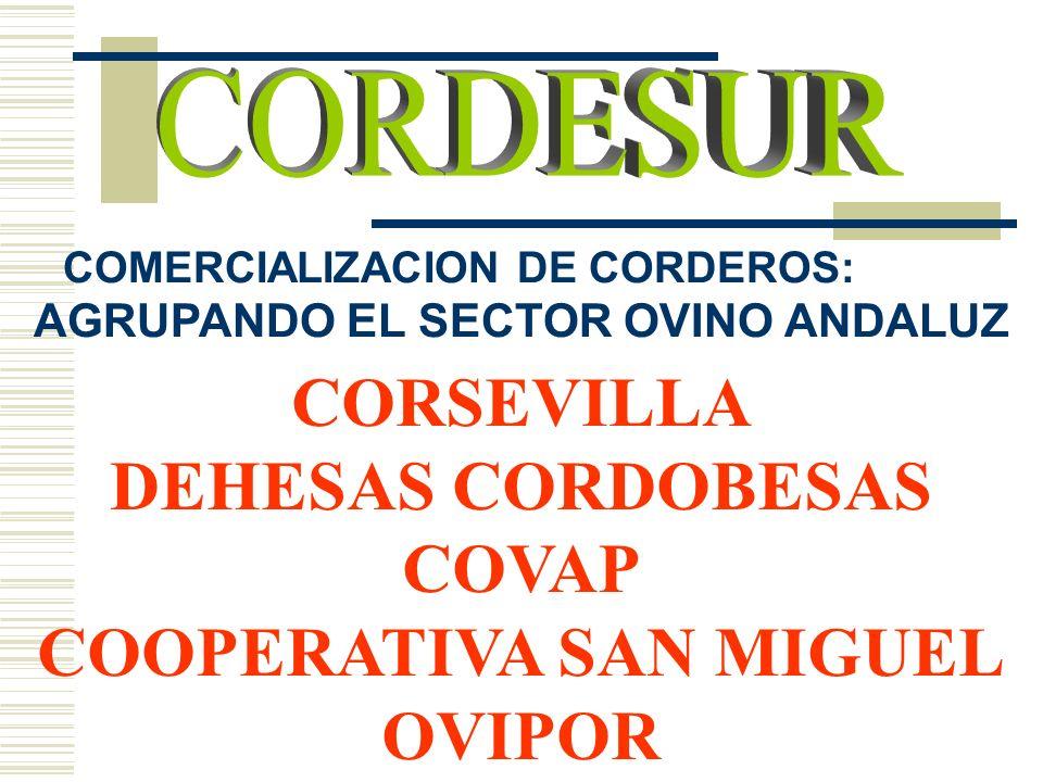 COMERCIALIZACION DE CORDEROS: AGRUPANDO EL SECTOR OVINO ANDALUZ CORSEVILLA DEHESAS CORDOBESAS COVAP COOPERATIVA SAN MIGUEL OVIPOR