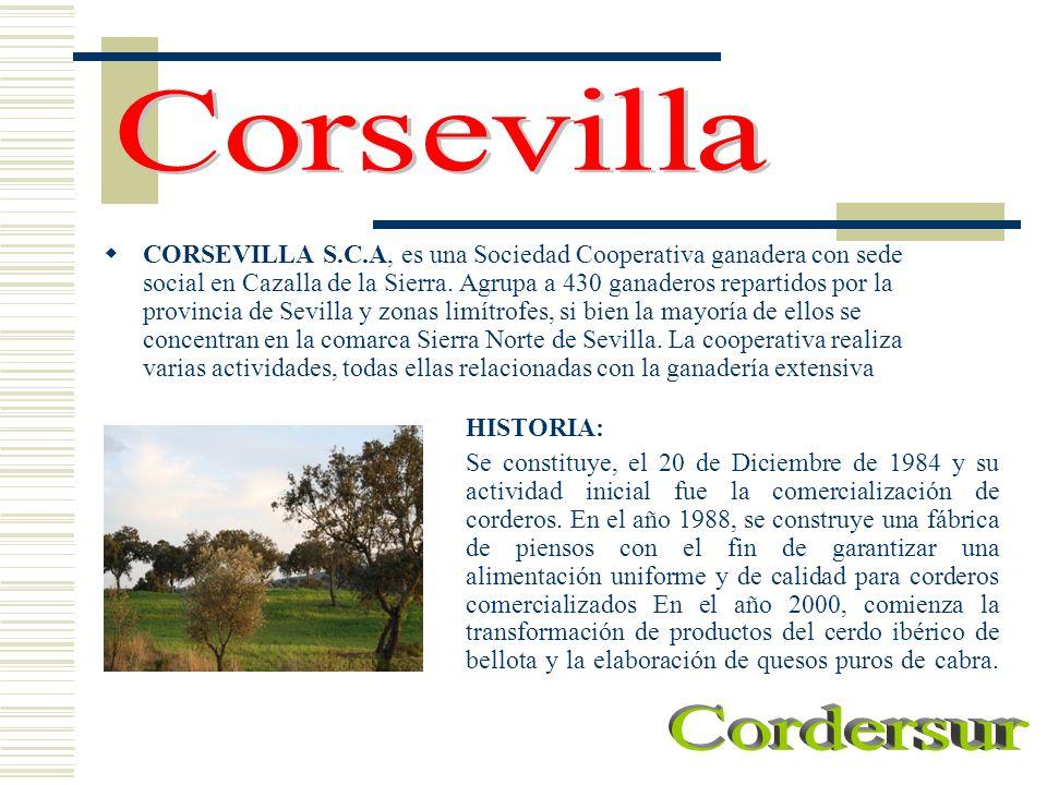 CORSEVILLA S.C.A, es una Sociedad Cooperativa ganadera con sede social en Cazalla de la Sierra. Agrupa a 430 ganaderos repartidos por la provincia de