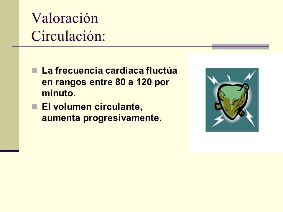 Valoración Circulación: La frecuencia cardiaca fluctúa en rangos entre 80 a 120 por minuto.
