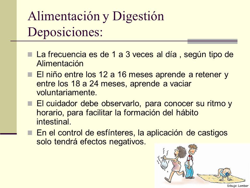 Alimentación y Digestión Deposiciones: La frecuencia es de 1 a 3 veces al día, según tipo de Alimentación El niño entre los 12 a 16 meses aprende a retener y entre los 18 a 24 meses, aprende a vaciar voluntariamente.