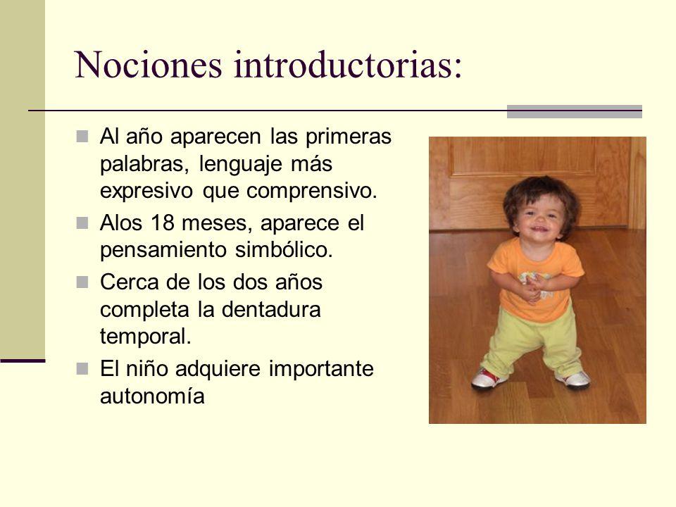 Nociones introductorias: Al año aparecen las primeras palabras, lenguaje más expresivo que comprensivo.
