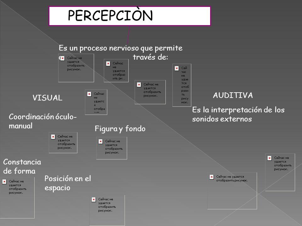 PERCEPCIÒN Es un proceso nervioso que permite a través de: Figura y fondo Coordinación óculo- manual Constancia de forma Es la interpretación de los sonidos externos Posición en el espacio VISUAL AUDITIVA