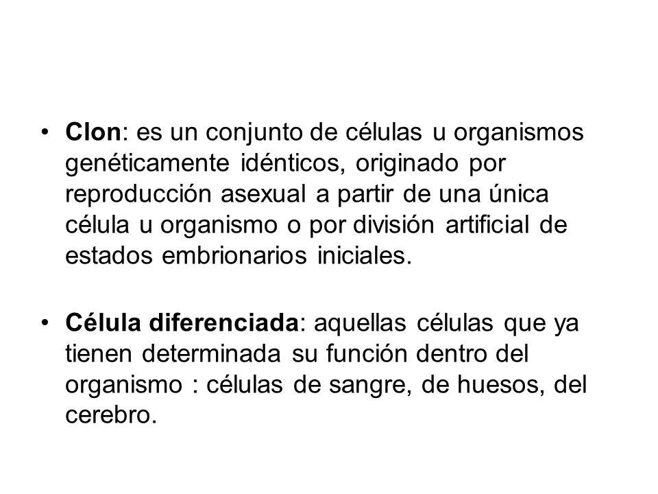 Clon: es un conjunto de células u organismos genéticamente idénticos, originado por reproducción asexual a partir de una única célula u organismo o po
