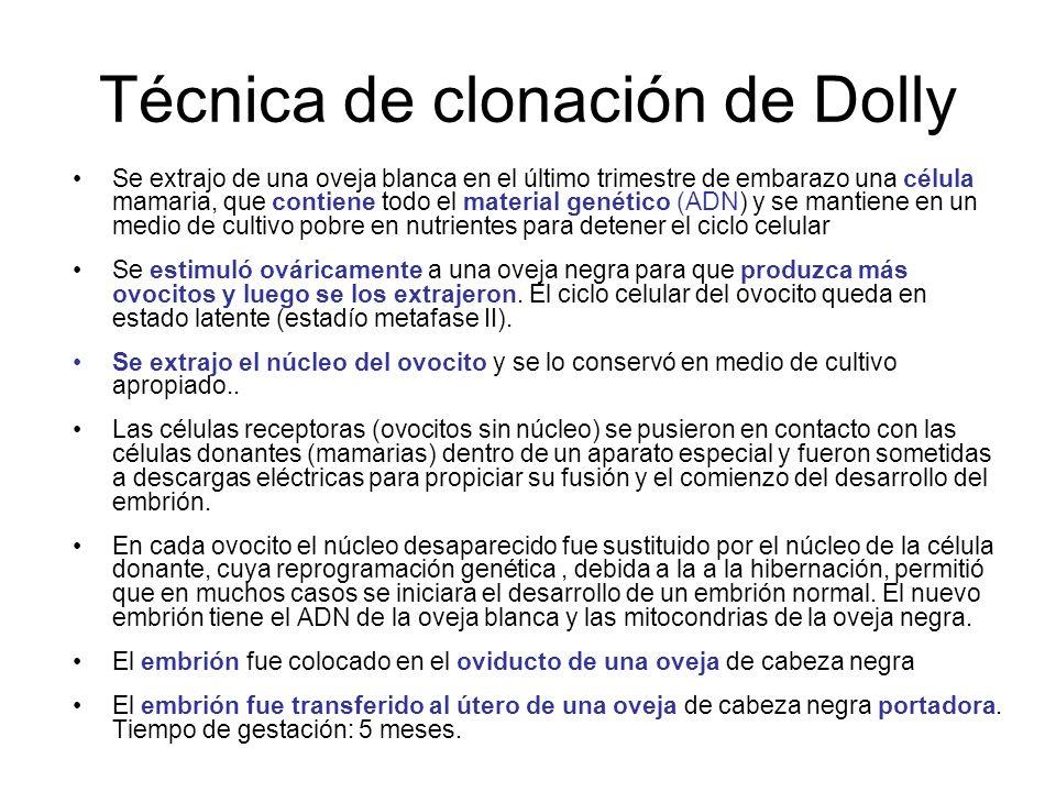 Técnica de clonación de Dolly Se extrajo de una oveja blanca en el último trimestre de embarazo una célula mamaria, que contiene todo el material gené
