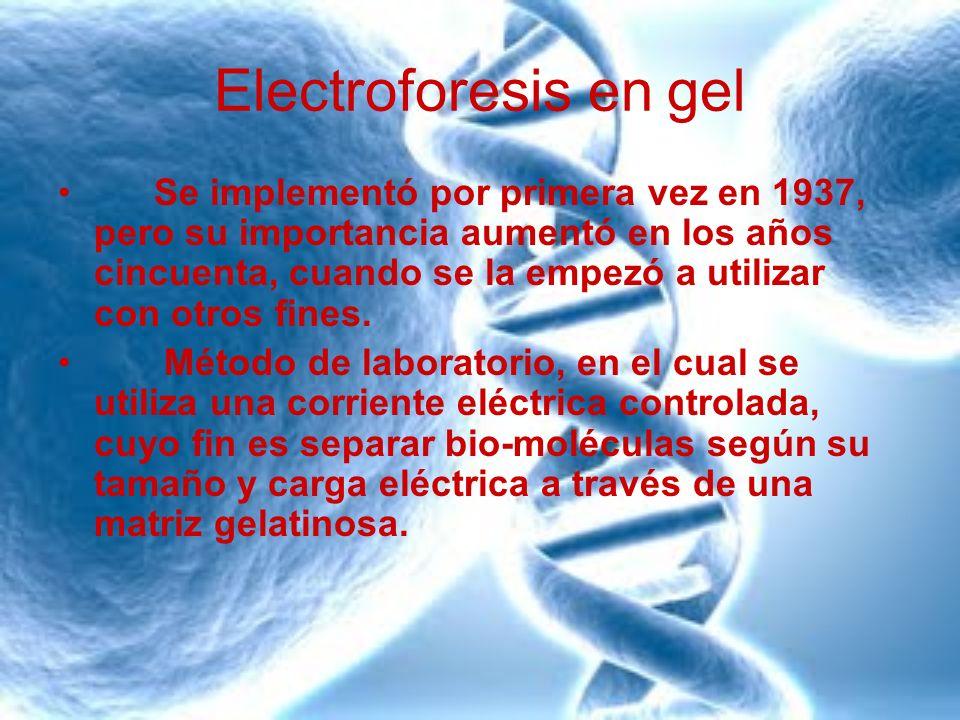 Electroforesis en gel Se implementó por primera vez en 1937, pero su importancia aumentó en los años cincuenta, cuando se la empezó a utilizar con otr