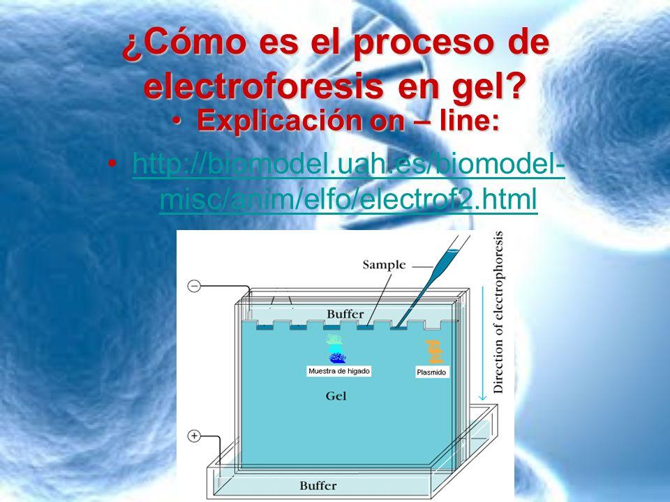 ¿Cómo es el proceso de electroforesis en gel? Explicación on – line:Explicación on – line: http://biomodel.uah.es/biomodel- misc/anim/elfo/electrof2.h