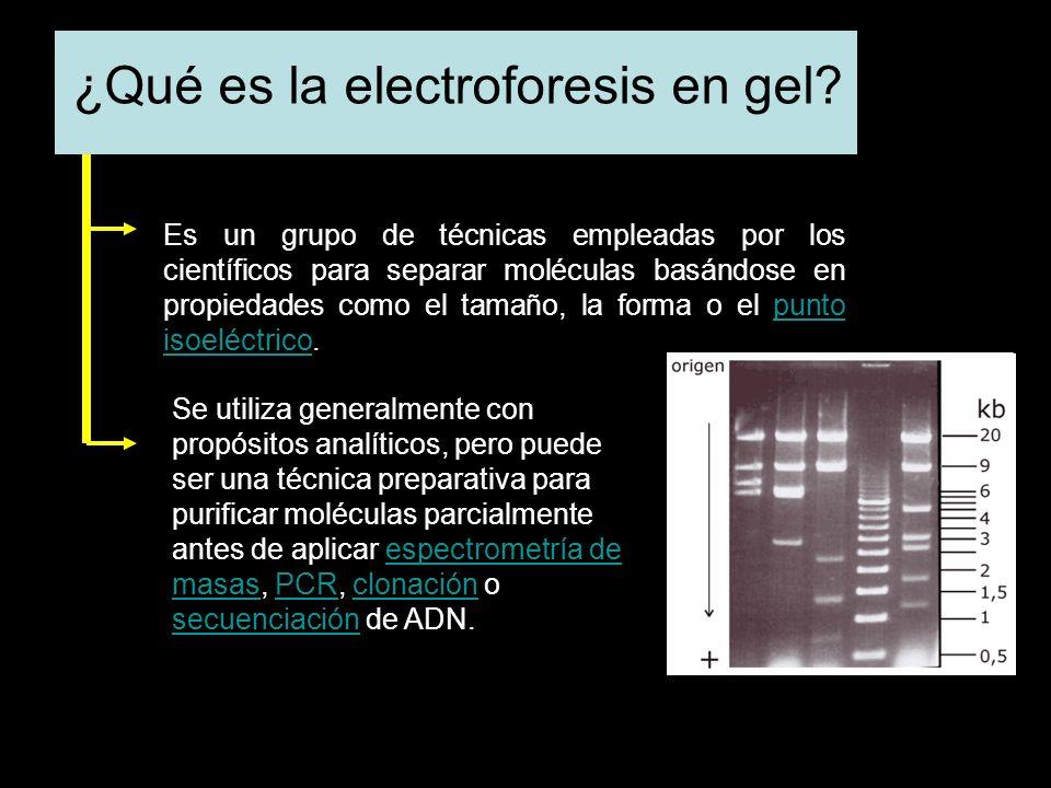 ¿Qué es la electroforesis en gel.