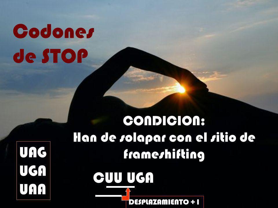 Codones de STOP UAG UGA UAA CONDICION: Han de solapar con el sitio de frameshifting CUU UGA DESPLAZAMIENTO +1