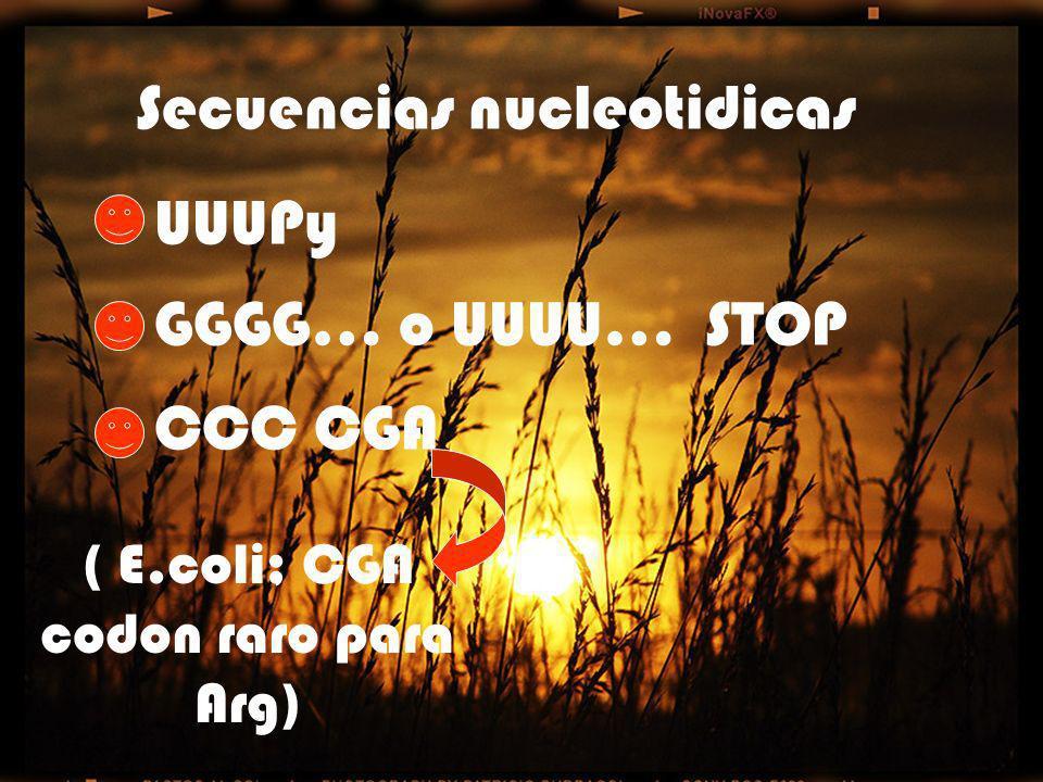 Secuencias nucleotidicas UUUPy GGGG… o UUUU… STOP CCC CGA ( E.coli; CGA codon raro para Arg)