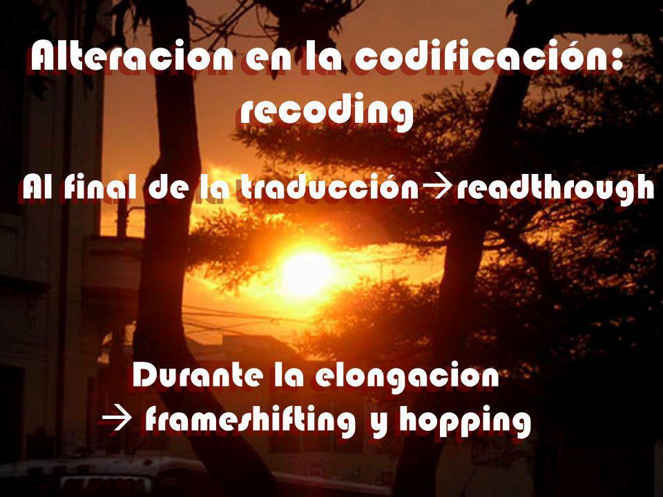 Alteracion en la codificación: recoding Alteracion en la codificación: recoding Al final de la traducción readthrough Durante la elongacion frameshift